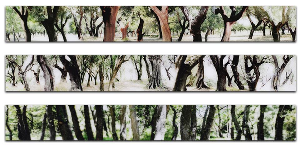 Deglio, Muda, Malaucène, 2009, verso signiert und nummeriert, Diasecverfahren, 25 x 200 cm, AP (5)